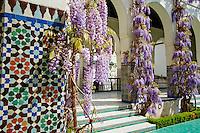France, Paris (75), la Grande Mosquee de Paris, glycine en fleur // France, Paris, Paris Mosque