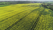 Oilsead, rape, in bloom, county louth, aerial photos