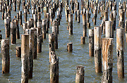 wooden pillars of an old dock standing in the water