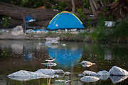 Black-necked stilt and homeless camp along Los Angeles River, Glendale Narrows, Los Angeles, California, USA
