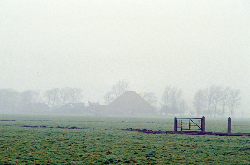 countryside in the fog