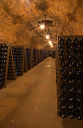 In the wine cellar: Bottles in racks (pupitres) for remuage (riddling of the bottles) to make the sediment move down to the cork, in one of the long underground corridors, the Union Champagne cooperative, also called Champagne de Saint Gall in Avize, Cote des Blancs, Champagne, Marne, Ardennes, France