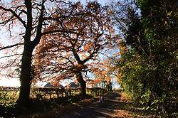 A man enjoys a bikeride through the beautiful late autumn landscape near Stagsden Bedfordshire England, UK. Some parts of Southern England enjoyed mild sunny weather over the weekend, though it is expected to be colder next week.Sunday, 1st December 2013. Picture by Jonathan Mitchell / i-Images