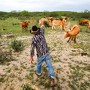 Sonny Wipff of Eagle Pass, Texas. Sonny's herd faces quarantine if any of the cattle escape his ranch. After 115 yrs of working the  ranch near the US Mexico border, his family is moving out to get away from the problems of smugglers.