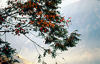Tree branches at Alishan region central Taiwan.