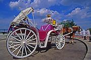 Philadelphia tour horse and carriage
