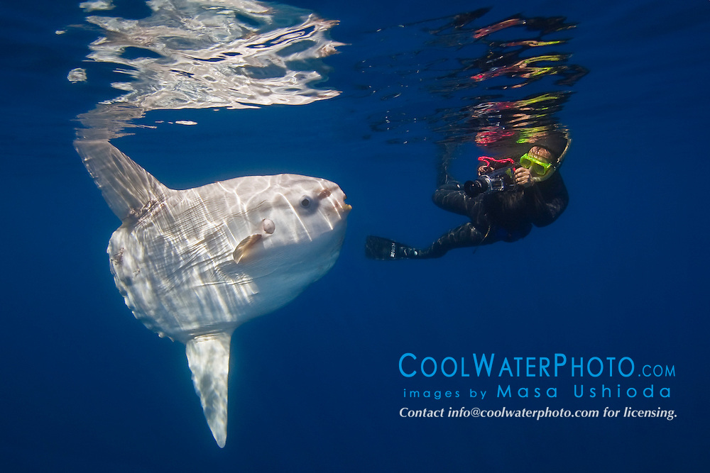 ocean sunfish, Mola mola, and diver with underwater video camera, off San Diego, California, East Paficic Ocean