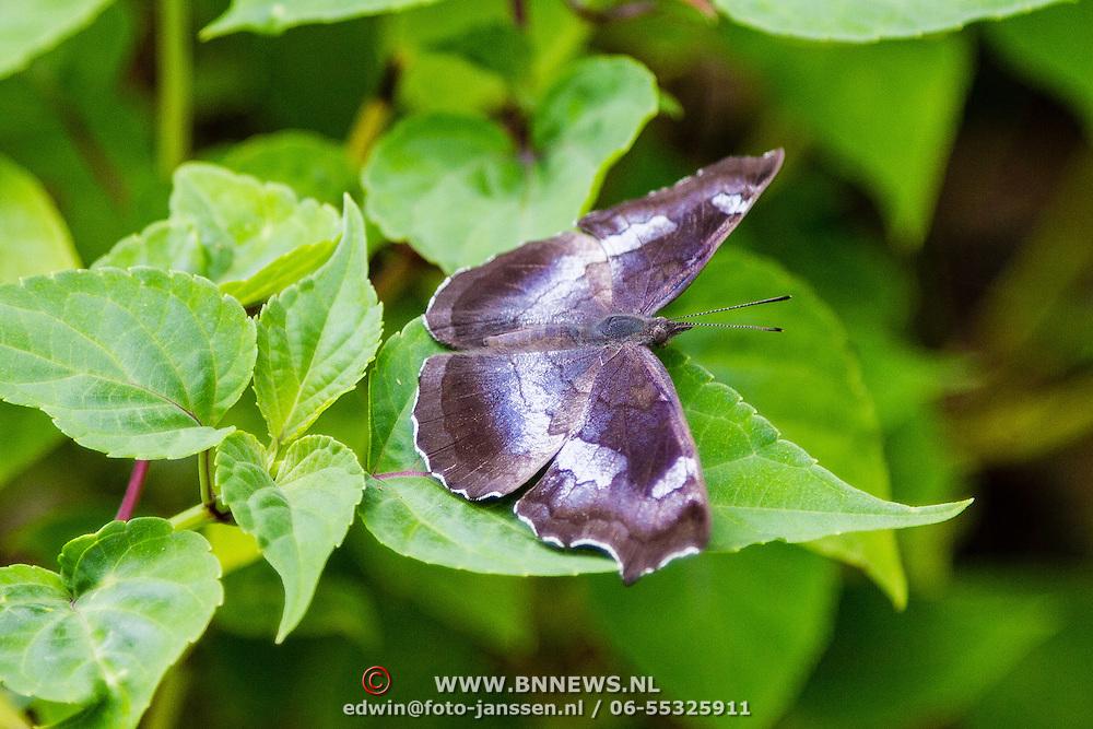THA/Bangkok/20160729 - Vakantie Thailand 2016 Bangkok, Thaise vlinder