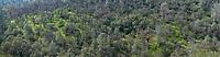 Northern California hillside trees. (54668 x 14122 pixels)