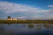 2015/03/05  – Monte Maiz, Argentina: Flooded soy fields on Monte Maiz region.. Floods are really common nowadays in the region, because the soil can't absorb much water since pestifies make it harder and less absorvent. Another reason is that soy needs less water than other crops, so the water under the soil its just a mere 30cm from the surface making floods common when rain falls. (Eduardo Leal)