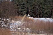Plantacja wierzby energetycznej na Podlasiu