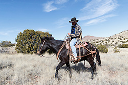Cowboy on horseback during bison roundup, Ladder Ranch, west of Truth or Consequences, New Mexico, USA.
