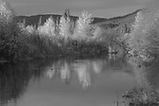 Indian Creek Below Taylorsville Bridge, Fall Leaves, Sierra Nevada Mountains, California rivers, willow trees, dark forest, alder trees, tuft of grass, Black and White Art, Black and White Photography