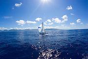 Sailboat in Kaneohe Bay, Oahu, Hawaii<br />