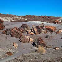 North America, USA, Arizona, Petrified Forest National Park. Crystal Forest badlands.