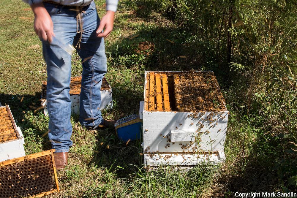 Eastaboga Bee Company, Lincoln, Alabama, Justin Hill