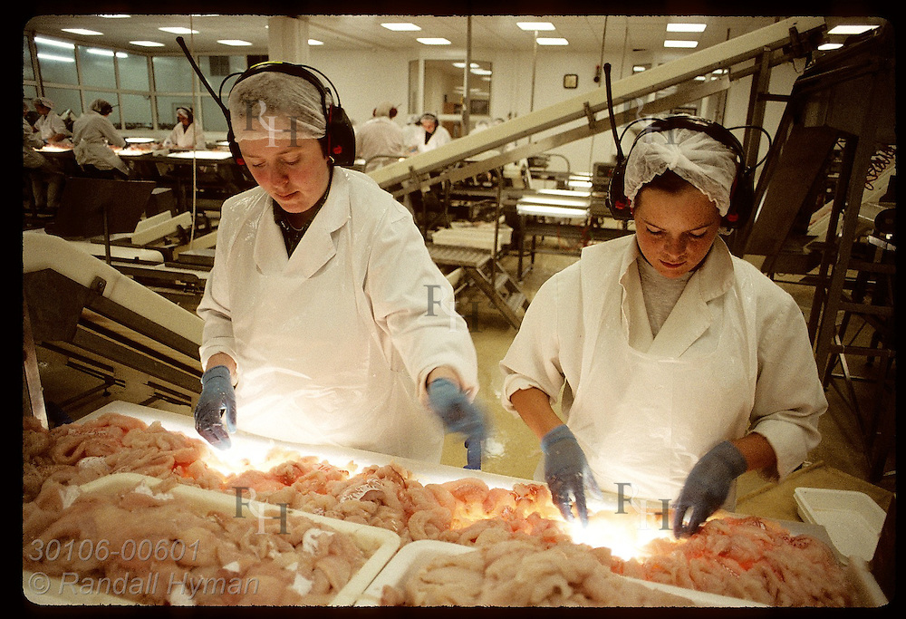 Two young women inspect & clean haddock fillets @ Isfelag's fish processing plant;Westman Islands Iceland