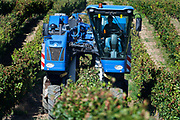 mechanical harvesting of grapes for wine France Languedoc Aude Razes