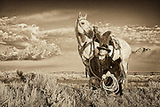 A wrangler takes a break with his horse with the Grand Teton range in the distance.