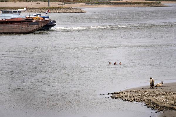 Nederland, Nijmegen, 29-7-2018Warme zomerse dag op het Waalstrand bij Nijmegen,  Het zwemmen in de rivier de waal, rijn, is gevaarlijk vanwege de verraderlijke stroming en de drukke scheepvaart. Door de langdurige droogte is de waterstand laag waardoor de rivier smaller is .Deze jongeren, jonge mensen, nemen het risico .Foto: Flip Franssen