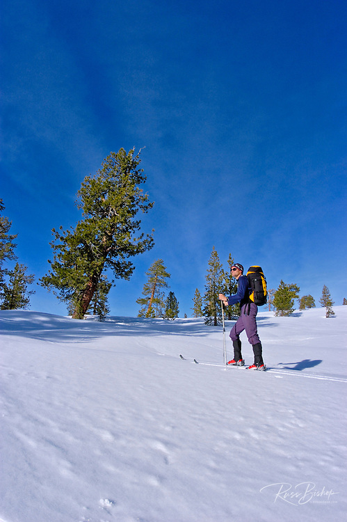 Backcountry skier traversing a ridge below Sentinel Dome, Yosemite National Park, California