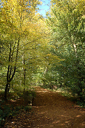 ©London News pictures...24/01/2011. A public consultation begins later this week over the sale of some of the UK's forests and a bill to enable the sale is due to go before the House of Lords. The state currently owns 18% of forests and woodland in England; however, spending cuts could result in parts being sold off or given away. PICTURED: 25/10/2010 A frosty autumn morning at Burnham Beeches, South Buckinghamshire on Monday 25th October 2010. The Beeches, covering 220 hectares, is primarily noted for its ancient beech and oak pollards and the range of flora and fauna associated with old trees and decaying wood. Picture credit Stephen SImpson/LNP
