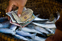 A hand with money in a basket of fish for sale at Hoi An early morning fish market.