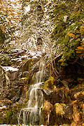 Landscape photographs of the Snow Covered Trees, WA
