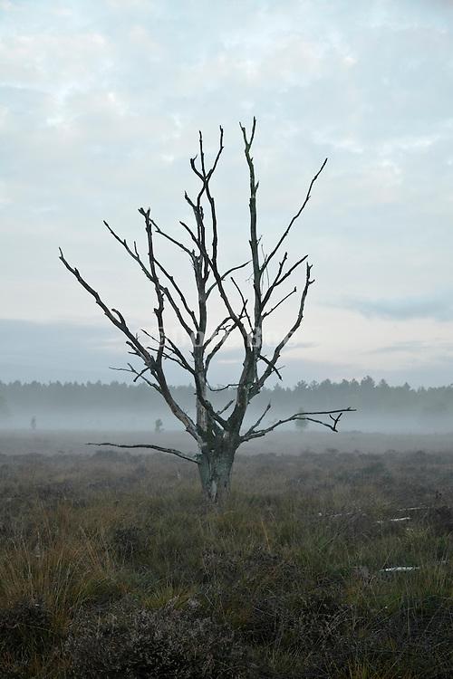ground fog on heath at dawn with dead tree