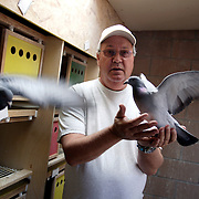 LAS VEGAS, NEVADA, November 12, 2007: Contestants from around the world gathered in Las Vegas, Nevada on November 12, 2007 to race their pigeons in the Las Vegas Classic. Ed Sittner is founder of the race and also races his own birds.
