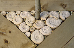 Decorative stone ammonites around base of bay tree set into decking