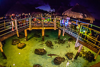 Reef sharks circling under the Toatea restaurant, Hilton Moorea Lagoon Resort, island of Moorea, French Polynesia.