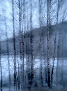 A drive-by iphone snapshot of snow covered birch trees in the south of Norway.