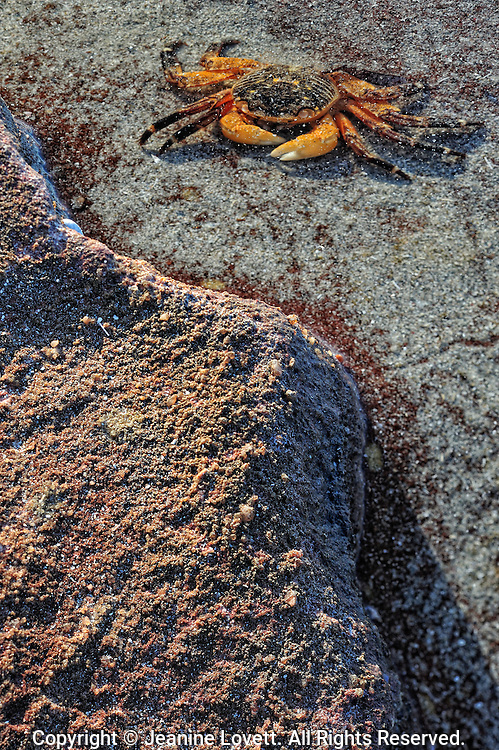 underwater crab near the shore line.