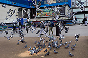 A flock of nervous pigeons take-off en-masse in front of  Elephant and Castle shopping centre, on 29th March, 2018 in London, England.