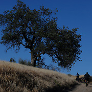 Hiking the hills of the Santa Monica Mountains after entering at the Victory Trailhead in West Hills, California.