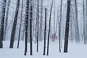 Diamond Peaks Ski Patrol member Teal Wyckoff skis through the Cameron Peak Fire burn scar near Montgomery Pass, Feb. 6, 2021.