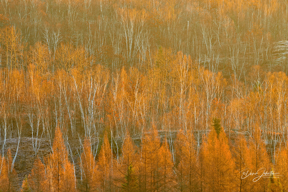 Morning light in the valley with pine, birch and larch in late fall, Greater Sudbury, Ontario, Canada