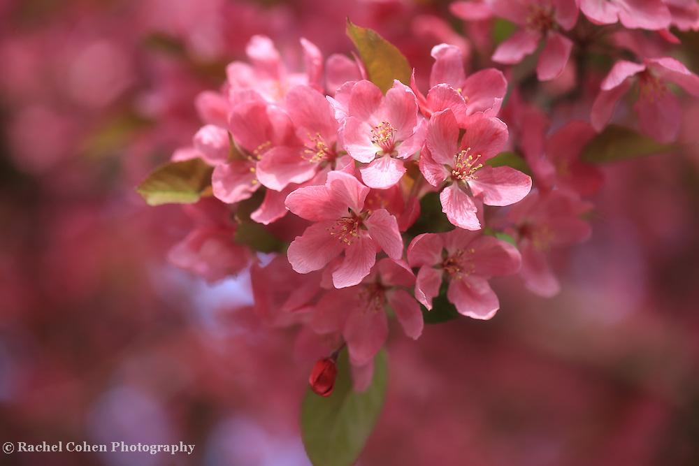 """Scrumptious in Pink"""