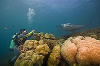 Manta rays and reef scenes at Manta Fest 2011 at Manta Ray Bay Hotel, Yap, Micronesia.