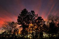 Sunset through trees in South Carolina, USA.
