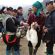 Markey goers barter for a goose at the Lung Khau Nhin Market. Vietnam. Lung Khau Nhin Market is rural tribal market hiding itself amongst the mountains and forests of the far north Vietnam about 10 km from the border with China. The market plays an important role for the local ethnic people, Flower Hmong, Black Zao, Zay, and very small ethnic groups  Pa Zi, Tou Zi, Tou Lao. Tourist trips to the market run from Sapa and Lao Cai every week. Lung Khau Nhin Market, Vietnam.15th March 2012. Photo Tim Clayton