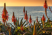 Laguna Beach Landscape California Stock Photo