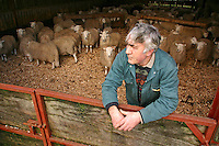 sheep farmer with his flock under cover