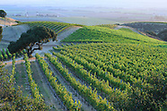 Moxxy for Paraiso Wines
