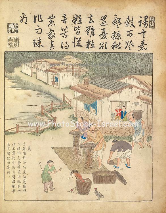 Ancient 17th century Chinese art Rice harvesting From Yu zhi geng zhi tu by Jiao, Bingzhen, 1696