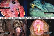 Publication: VSD (France)), No. 1635, December 24, 2008..Photography by Heidi & Hans-Jürgen Koch/animal-affairs.com