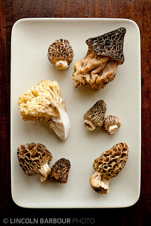 A collection of unique, edible fungi on a white rectangular plate.  Shot from the top down.