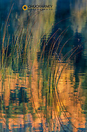 Reeds catch morning light with autumn reflections in Dickey Lake in the Kootenai National Forest, Montana, USA