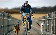 MI2/7/06 Warner<br /> ML0239D<br /> At Silver Sands State Park in Milford Larry Warner of Milford has a warm-blooded set of training wheels: dogs Ginger left and Bear right (Bear belongs to his daughter). Photo by Mara Lavitt